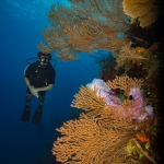 Timo dersch journalist diver writer underwater photgrapher